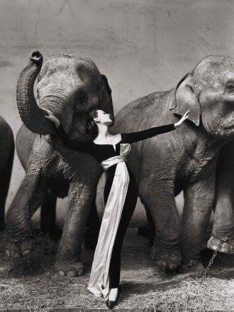 Два слона и дива Довима_foto
