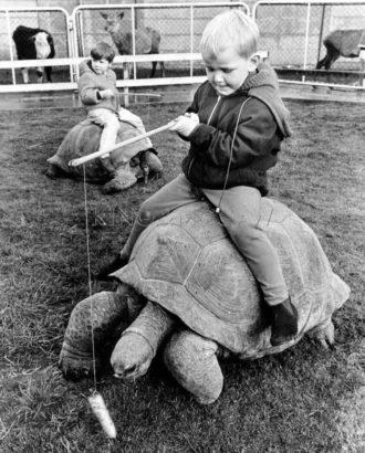 Осторожно, черепаха!_foto