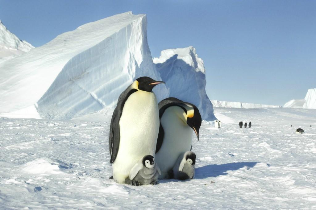 Антарктида. Сахар во льдах