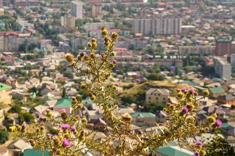 Дагестан. Кодекс гостеприимства_foto